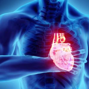 Doenças Cardeovasculares - Serviços Ana Sousa Nutricionista