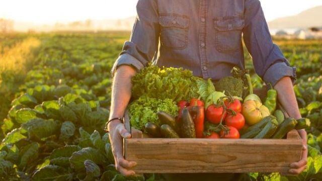 A dieta mediterranica é sustentável
